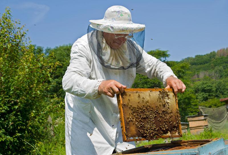 Μέχρι 30/4 οι αιτήσεις για εξοπλισμό και στήριξη της νομαδικής μελισσοκομίας