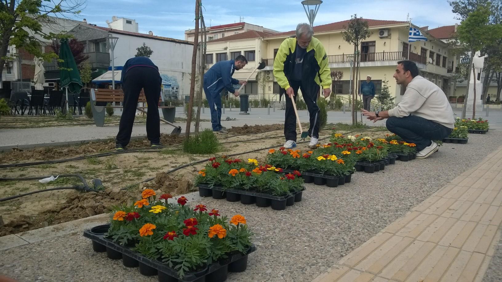 Φύτεψαν λουλούδια οι εθελοντές στην κεντρική πλατεία Ορεστιάδας